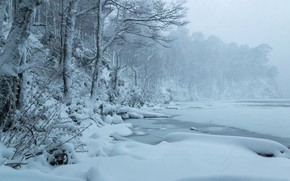 Picture winter, forest, snow, trees, lake, Chile, Chile, Lago del Toro, Huerquehue National Park, National Park …
