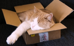 Wallpaper cat, sleeping, box