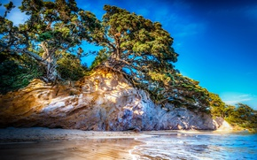 Picture sea, the sky, trees, rocks, coast, HDR, New Zealand, trees, coast, New Zealand, crag, Tasman