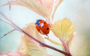 Picture macro, ladybug, branch, insect