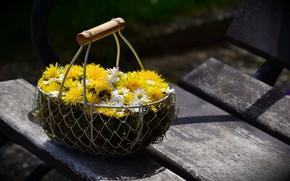 Wallpaper Dandelions, Daisy, Flowers, Flower Basket