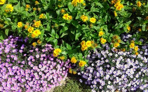 Picture autumn, flowers, flowerbed, different, mamala ©