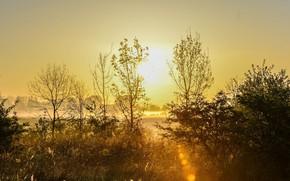 Picture trees, landscape, nature, beauty