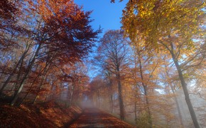 Picture road, autumn, morning, fog
