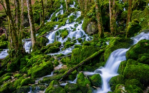 Picture forest, water, moss, stream