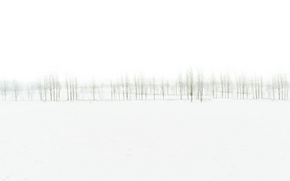 Picture trees, nature, fog