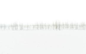 Wallpaper nature, trees, fog