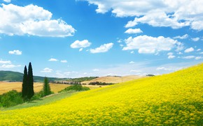 Picture field, flowers, nature, meadow, blue sky