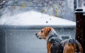 Wallpaper winter, snow, dog