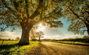 Picture road, landscape, nature, tree, dawn