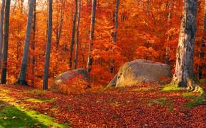 Picture autumn, forest, leaves, the sun, trees, stones, moss, Ukraine, Transcarpathia