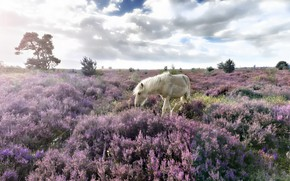 Picture field, landscape, horse