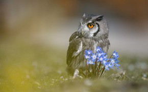 Picture animals, look, flowers, nature, background, owl, bird, portrait, blurry, owl