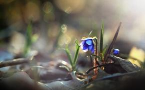 Wallpaper flower, nature, background