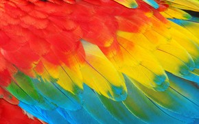 Picture pen, feathers, Background, feather, card