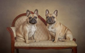 Picture a couple, two dogs, family portrait, French bulldog