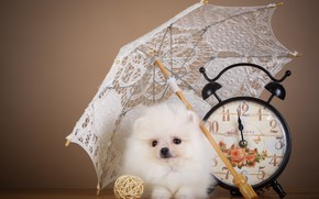 Picture watch, umbrella, puppy