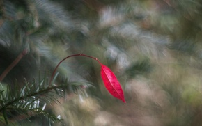 Picture red, sheet, leaf, bokeh