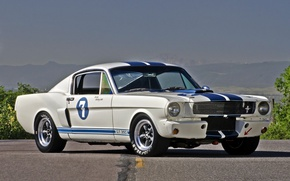 Picture white, Ford Mustang, muscle car, Shelby GT350R, 1965.