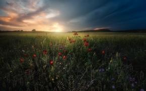 Wallpaper flowers, meadow, grass