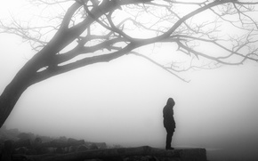 Picture misty, tree, solitude, loneliness, branches, person, foggy, gloomy, desolation