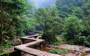 Picture forest, trees, green, jungle, river, brown, the bridge