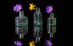 Picture glass, flowers, reflection, bottle, petals, still life, decanter