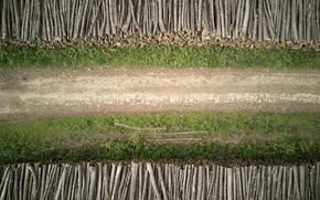 Picture road, forest, trees, the view from the top, logs, United Kingdom, forest road, UK, drone …