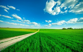 Picture road, greens, field, the sky, grass, clouds
