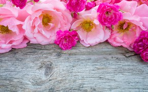 Picture flowers, pink, buds, wood, pink, flowers, bud