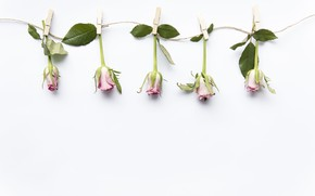 Picture roses, buds, flower, pink, decor, roses
