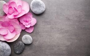 Picture flowers, stones, pink, pink, flowers, stones, spa, zen