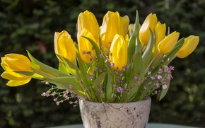 Wallpaper tulips, buds, yellow tulips, bouquet, gypsophila, vase