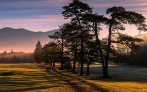 Picture road, field, trees, mountains, fog, morning