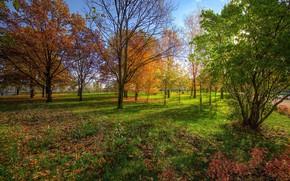 Picture Grass, Autumn, Park