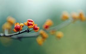 Picture macro, flowers, berries, branch