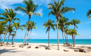 Picture nature, Beach, Palma, Summer, Tropics