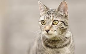 Wallpaper mustache, eyes, background, cat