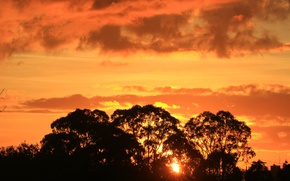 Picture trees, sunset, silhouette, Australia, glow