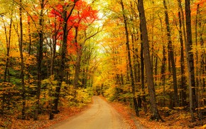 Picture road, autumn, forest, trees, landscape