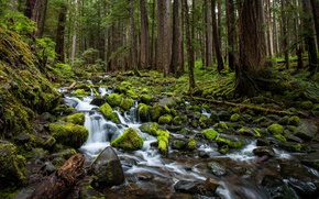Picture forest, trees, stream, stones, moss, Washington, Washington, Olympic National Park, Olympic national Park, Sol Duc ...