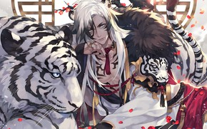 Picture tiger, guy, white tiger