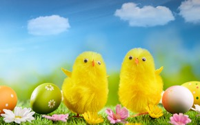 Picture flowers, Easter, eggs, holiday, chickens, weed