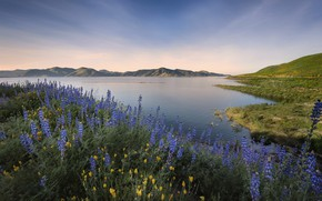 Picture the sky, flowers, lake