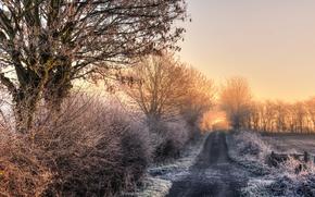 Wallpaper road, trees, nature, morning