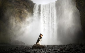 Picture each, waterfall, dog