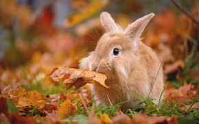 Wallpaper leaves, leaf, autumn, foliage, rabbit