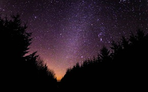 Picture forest, the sky, stars, silhouette