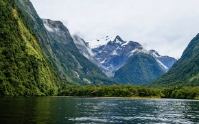 Picture forest, trees, mountains, rocks, shore, New Zealand, Bay, the fjord, Milford, Harrison Cove