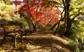 Picture Autumn, Park, Fall, Foliage, Park, Autumn, Colors, Falling leaves, Leaves, Benches